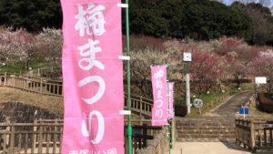 【写真レポート】赤塚山公園(ぎょぎょランド)の「梅まつり」が期間を3/18まで延長!梅に加えて河津桜も見ごろに